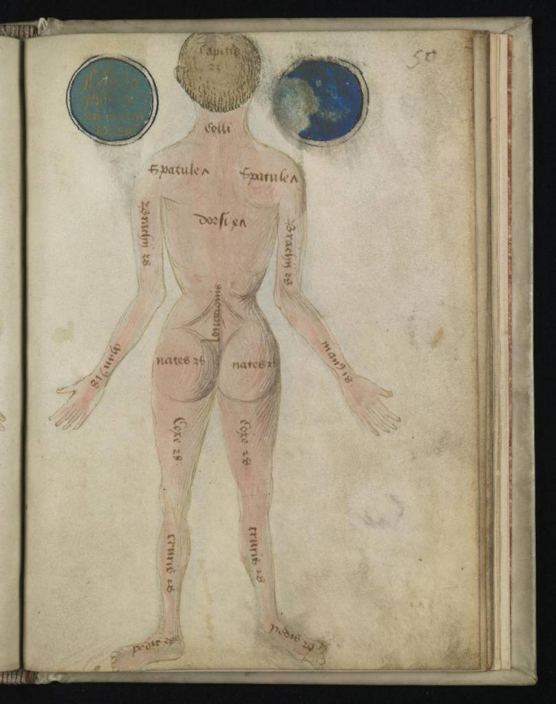 6 Anatomical Illustrations from 15th-century England
