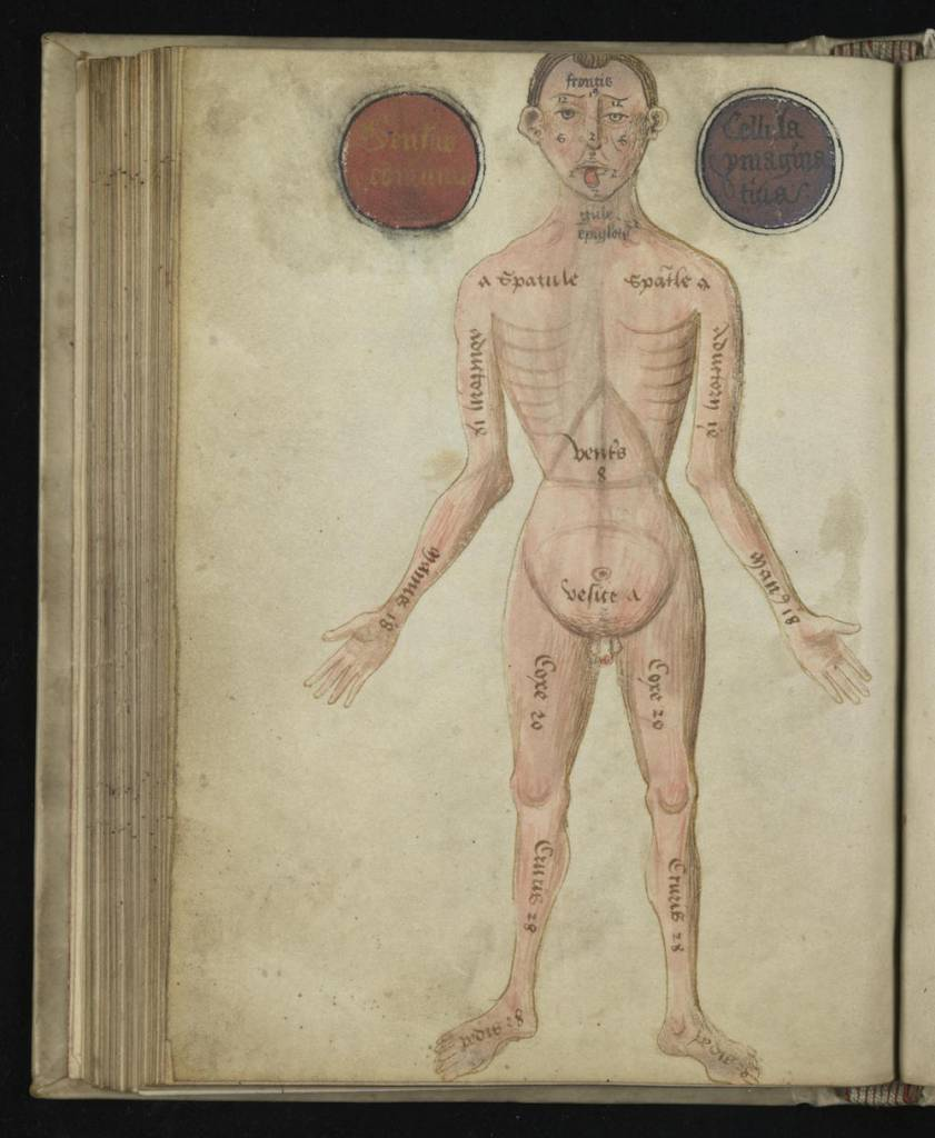 7 Anatomical Illustrations from 15th-century England