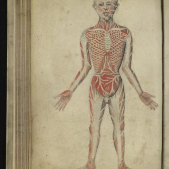 Wound Man And Other Illustrations From Pseudo-Galen, Anatomia (14th Century)