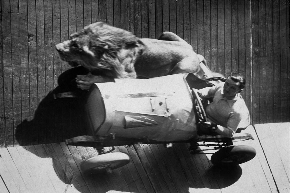 Mr Egbert taking his five year-old lion for a ride on the wall of death at Mitcham fair. (Photo by Hulton Archive/Getty Images)