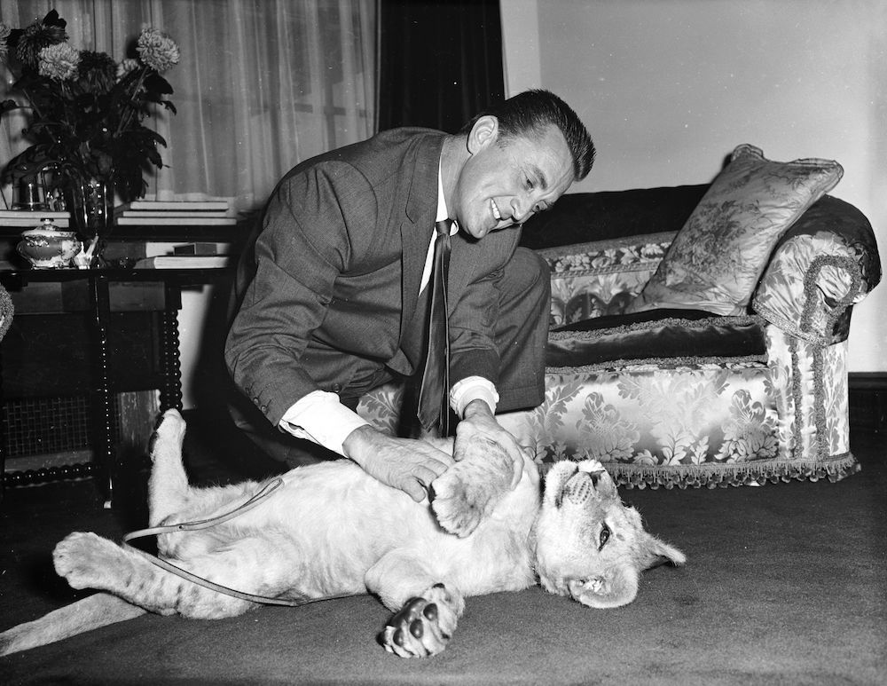 7th December 1960:  American film star Kirk Douglas with a lion cub called Spartacus which was presented to him by the director of Southport zoo in appreciation of Douglas' film role.  (Photo by Lee/Central Press/Getty Images)