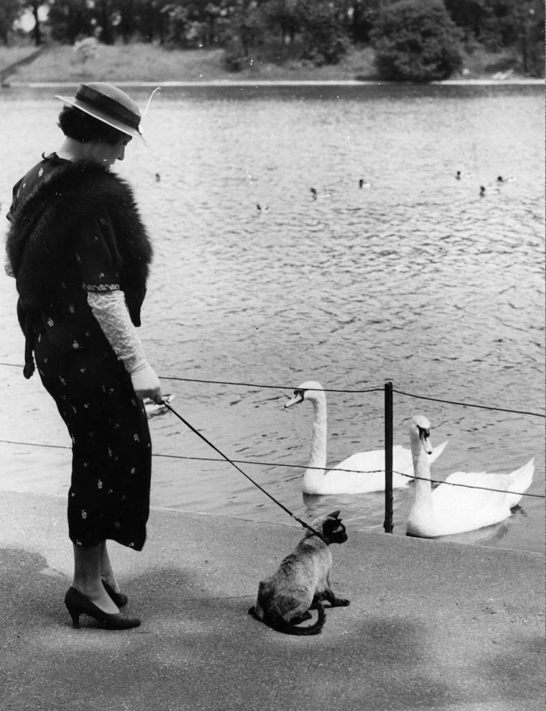 7th June 1937:  Mrs Walters, walking her Siamese cat Becky on a lead in Regent's Park, stops while Becky admires the swans.  (Photo by William Vanderson/Fox Photos/Getty Images)