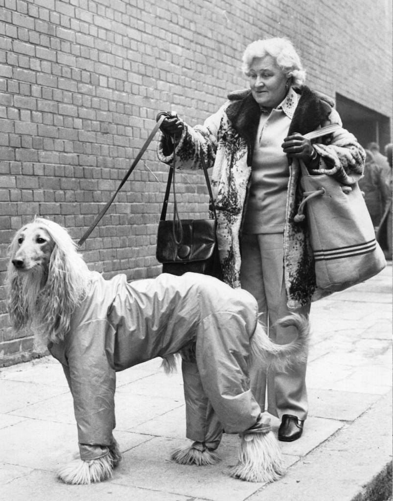 7th February 1975:  Eileen Snelling from Reading brings her Afghan Hound to the Crufts Dog Show at the Olympia Stadium.  (Photo by Central Press/Getty Images)