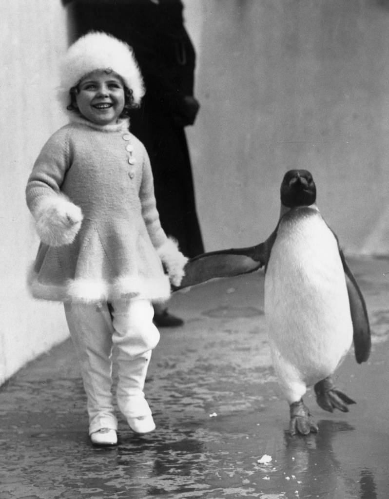 15th April 1937: Child film actress Binkie Stuart hand in hand with a penguin during a visit to London Zoo. (Photo by Fox Photos/Getty Images)