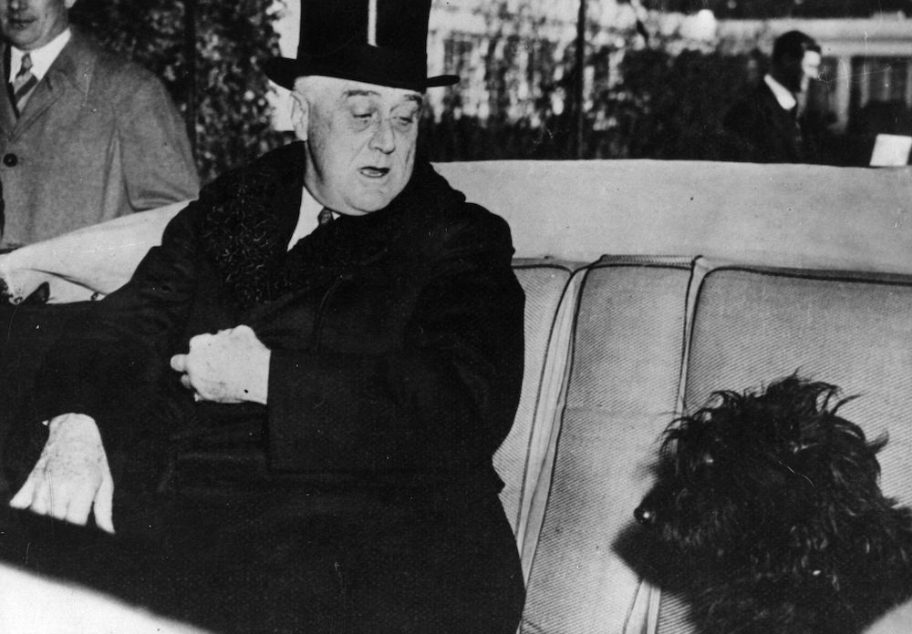 7th February 1941:  American President Franklin Delano Roosevelt ( 1882 - 1945) in his car with his Scottish terrier, Mr Falla.  (Photo by Hulton Archive/Getty Images)