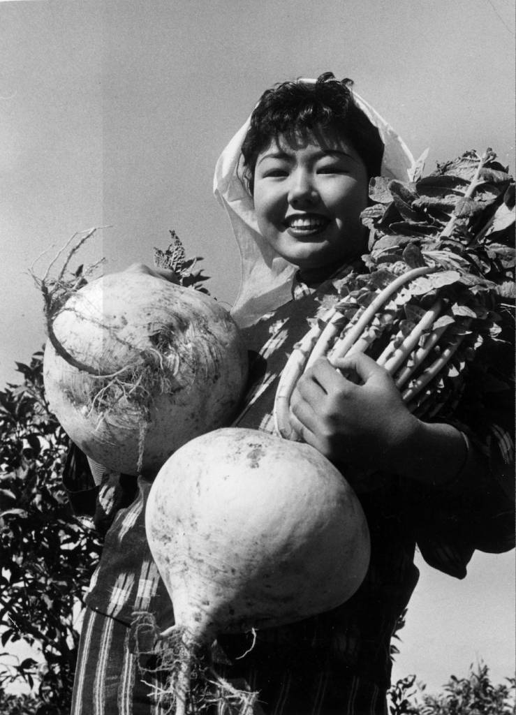7th January 1957:  A nineteen year old agricultural worker in Sakurajima Island, Southern Japan, proudly holds the first of the giant turnip harvest.  (Photo by Keystone/Getty Images)