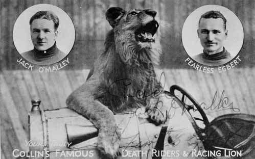 racing lion death  riders