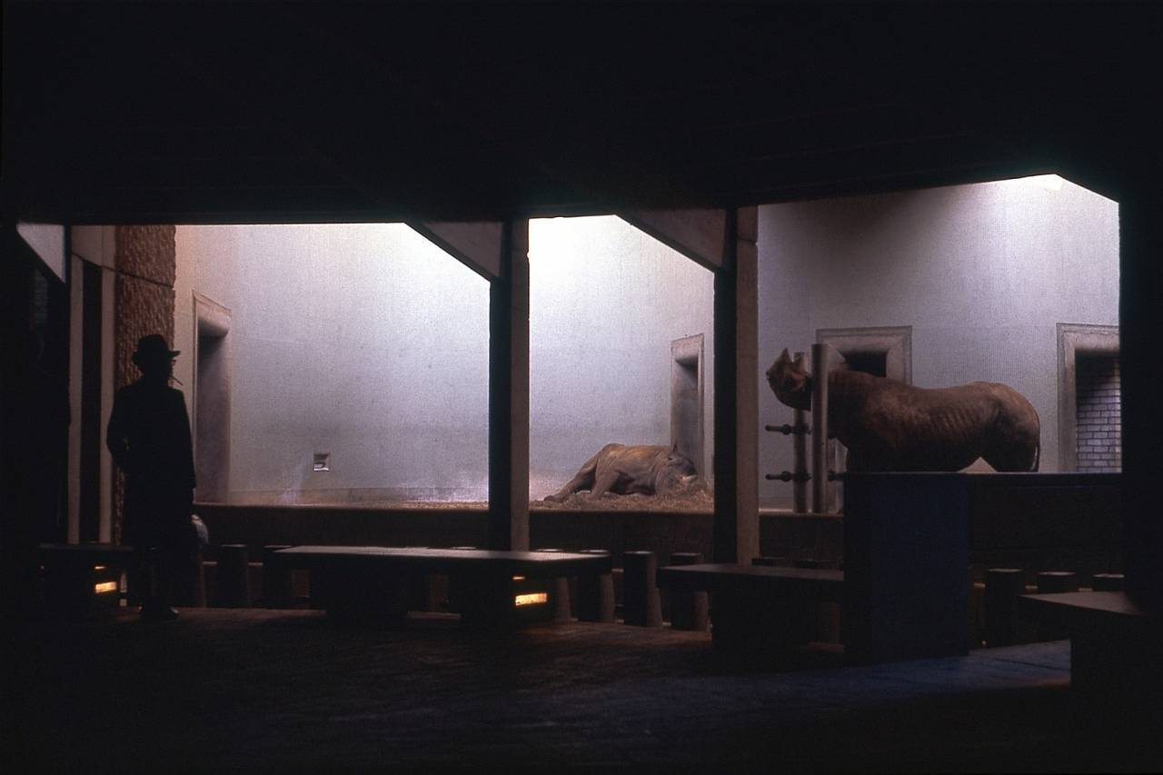 Rhinoceros Exhibit 3: London Zoo - Regent's Park - December 1967
