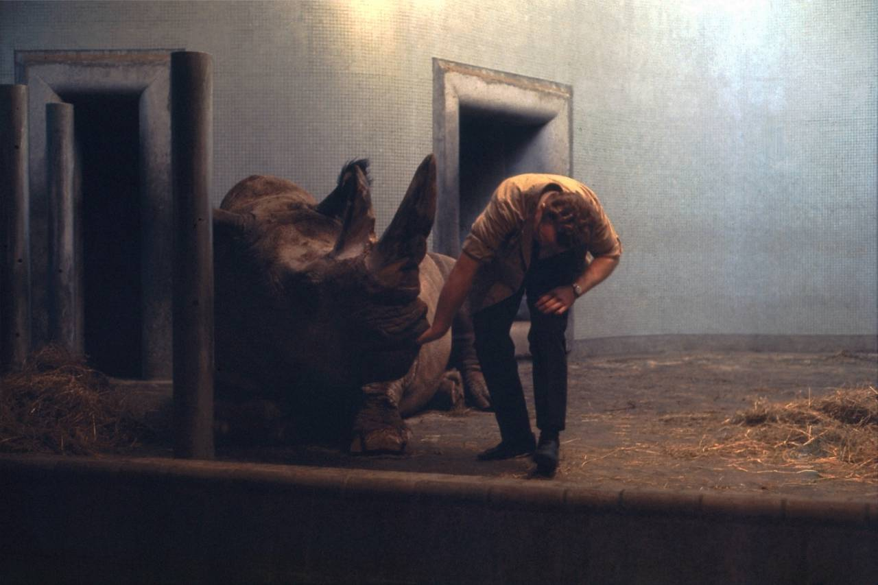 Rhinoceros and Veterinarian 2 - London Zoo - Regent's Park - December 196