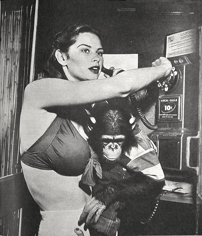 Irish McCalla chimpanzee