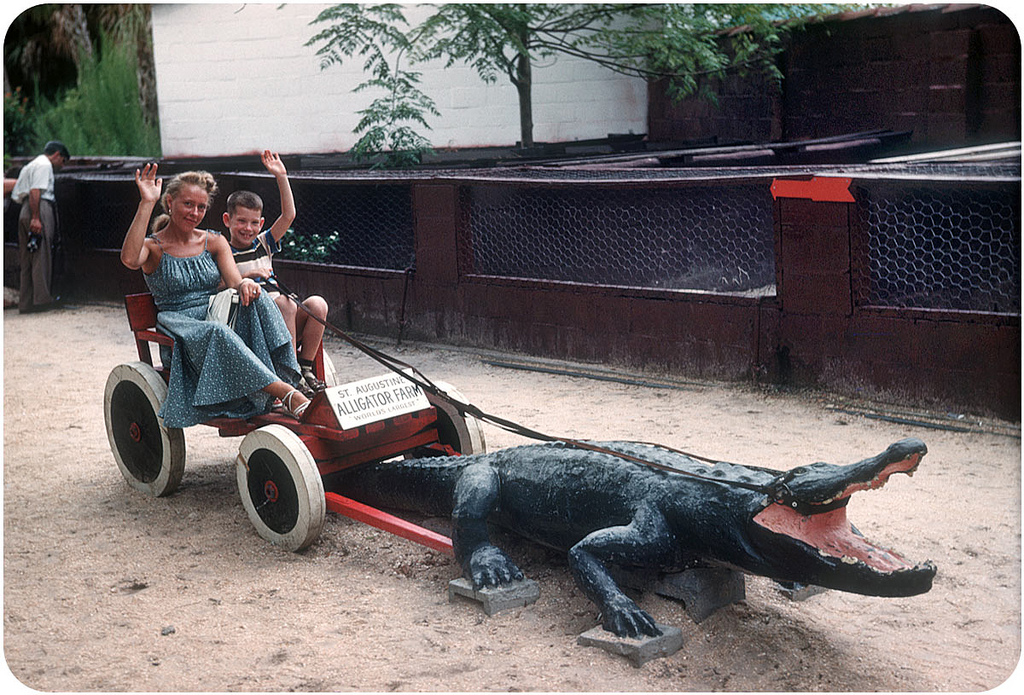 Hello From the Alligator Farm — 1952 The St. Augustine Alligator Farm Zoological Park, as it is now called, was established in 1893, making it one of the oldest attractions in Florida.