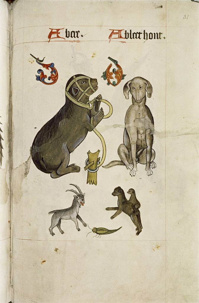 Bear and Bloodhound, Goat, green insect, apes.