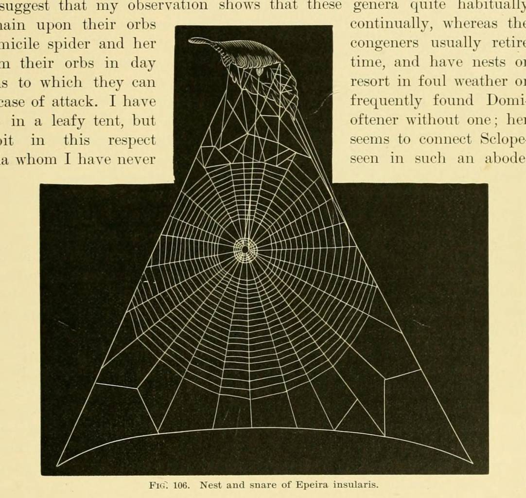 American spiders and their spinningwork