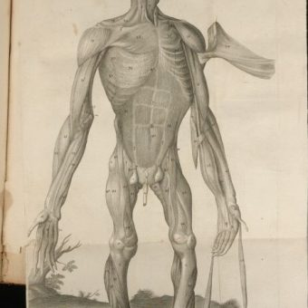 Monkey, An Ape And A Man: The Anatomy of A Pygmie Race (1699)