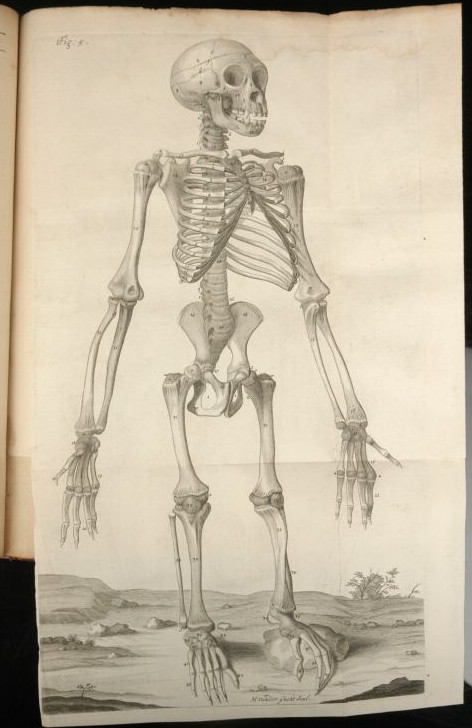 Anatomy of a chimpanzee Edward Tyson Cowper
