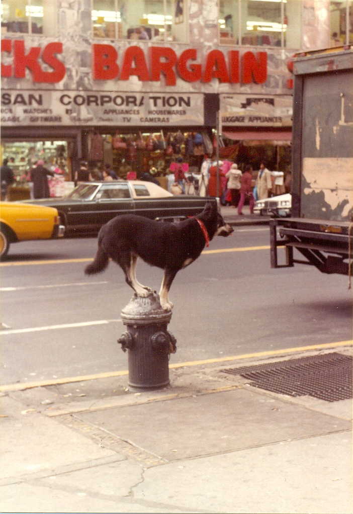 """I was walking in New York City one day when a dog rushed past me and jumped up onto a fire hydrant in the street. The dog perched there for a short time and seemed quite comfortable up there. It was an unusual sight but there was a saying at that time: """"only in New York"""" which summed it up. Nothing seemed that unusual in New York in the early 1980s."""