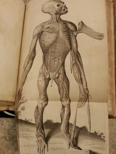 Links Between The Discovery Of Primates And Anatomical Comparisons