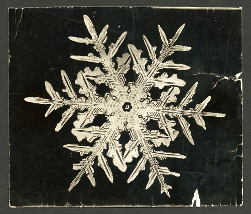 Snow Beauties: Bewildering First Photos Of Snowflakes By