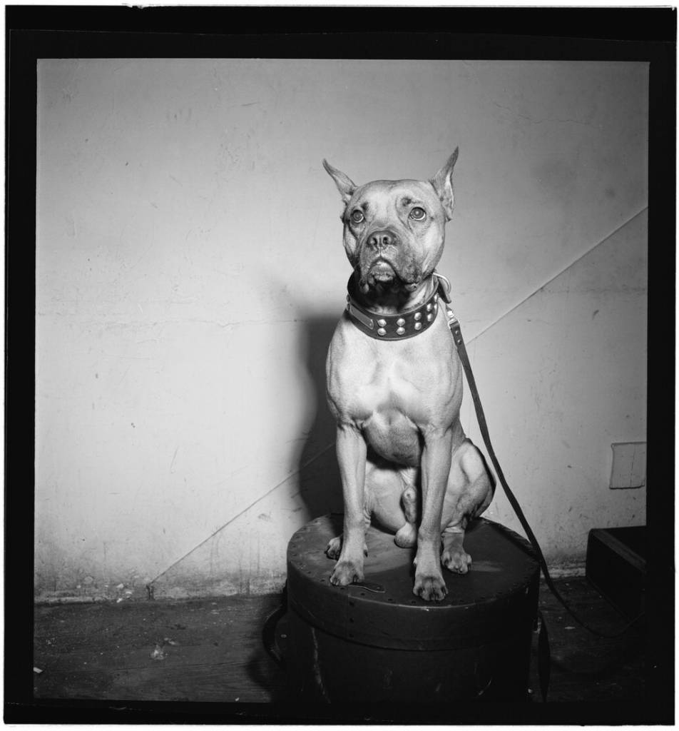 Portrait of Mister (Billie Holiday's dog), New York, N.Y., between 1946 and 1948