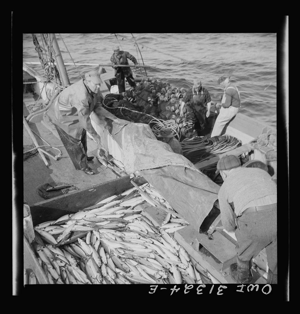 Gloucester, Massachusetts. Fisherman taking on mackerel aboard the Alden. Gloucester, Massachusetts