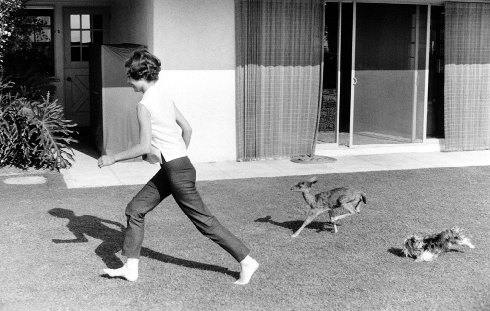 Audrey Hepburn takes her pet fawn Pippa or 'Ip' shopping in Gelson's supermarket, in Beverly Hills ca 1953