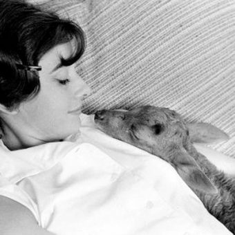 Audrey Hepburn And Her Pet Fawn Ip
