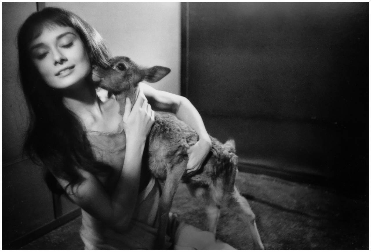 photo-bob-willoughby-audrey-hepburn-with-22ip22-set-22green-mansions22-1958