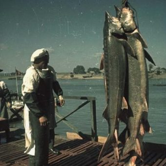 Caviar Fishing On The Caspian Sea (1949)