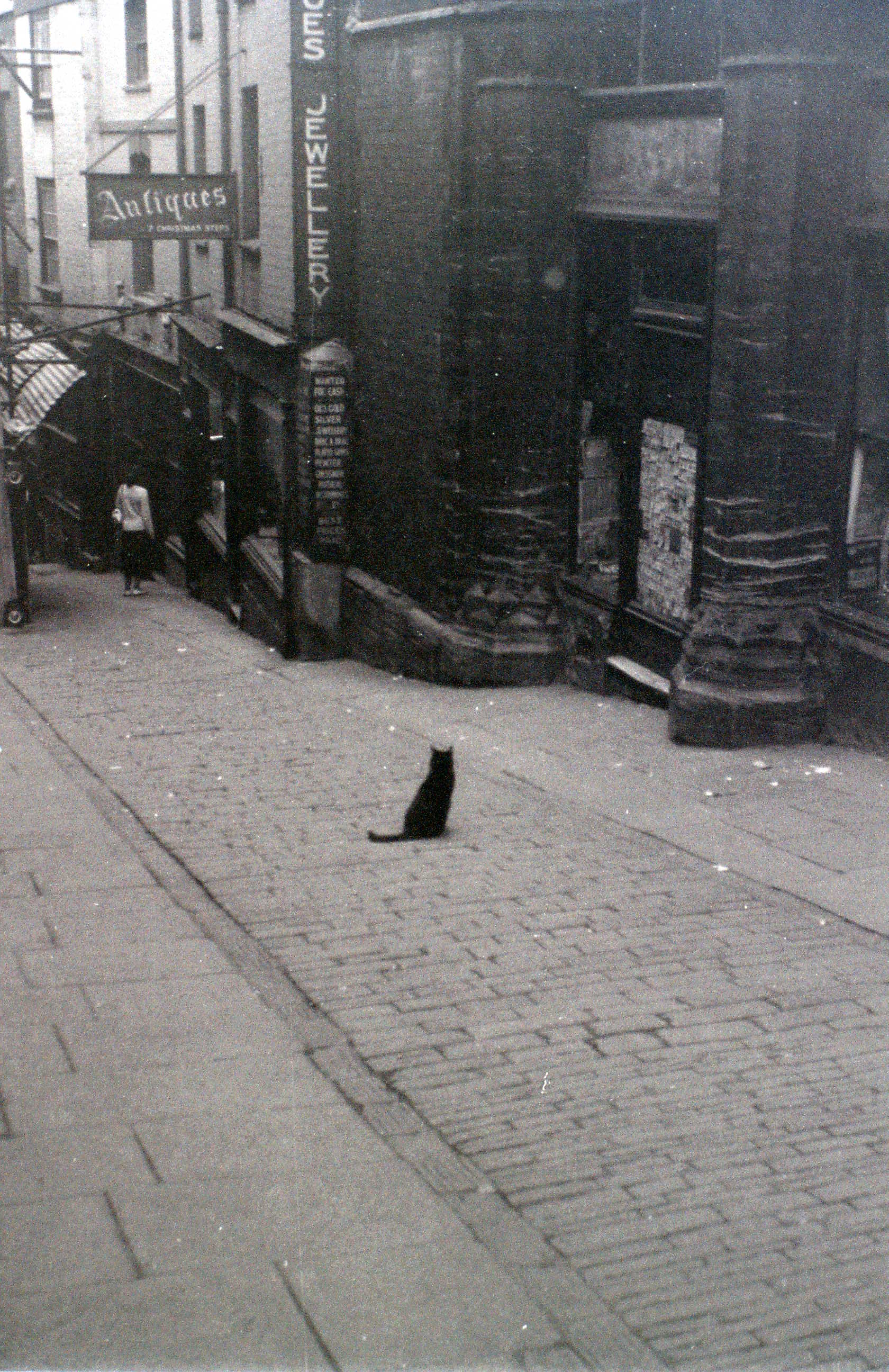 The Cat of Christmas Steps, Bristol, 30 July 1958