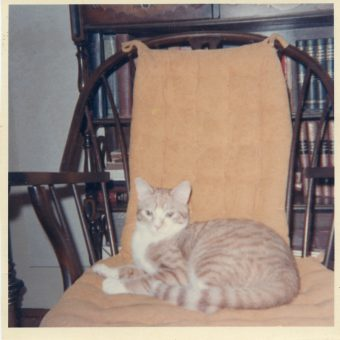 I Felis Catus: A Cat At Home In The 1970s