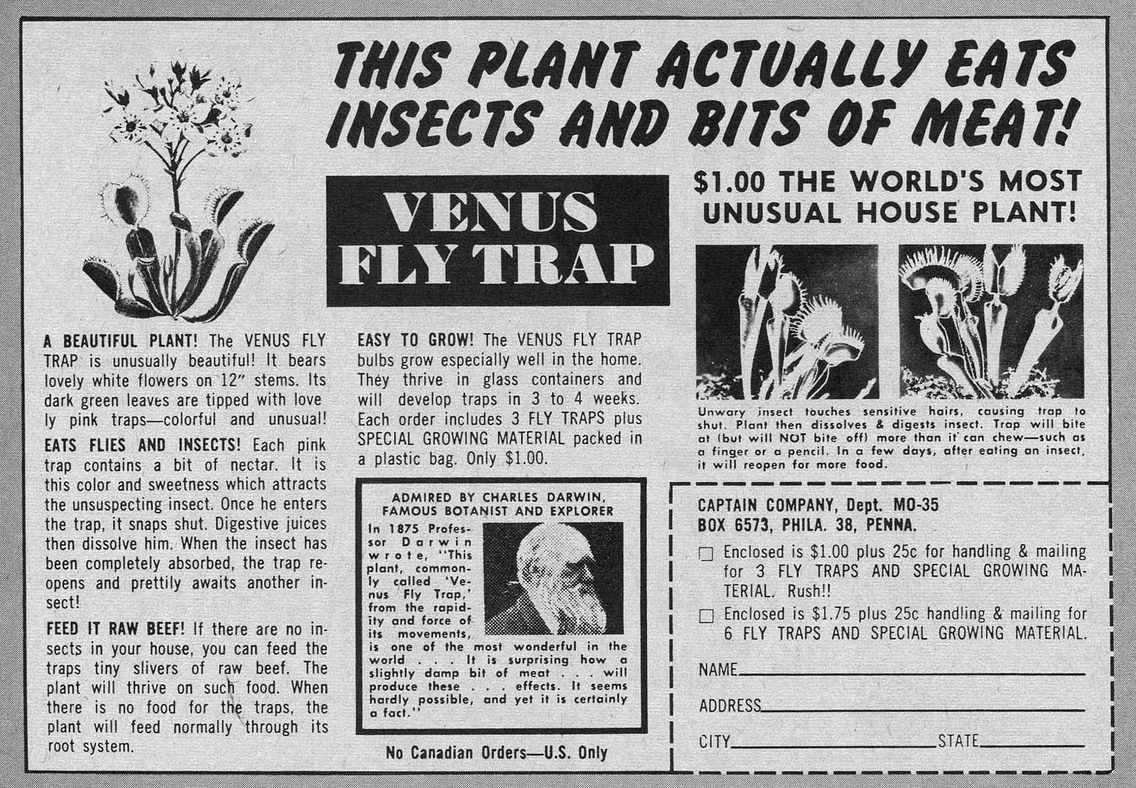 venus fly trap advert
