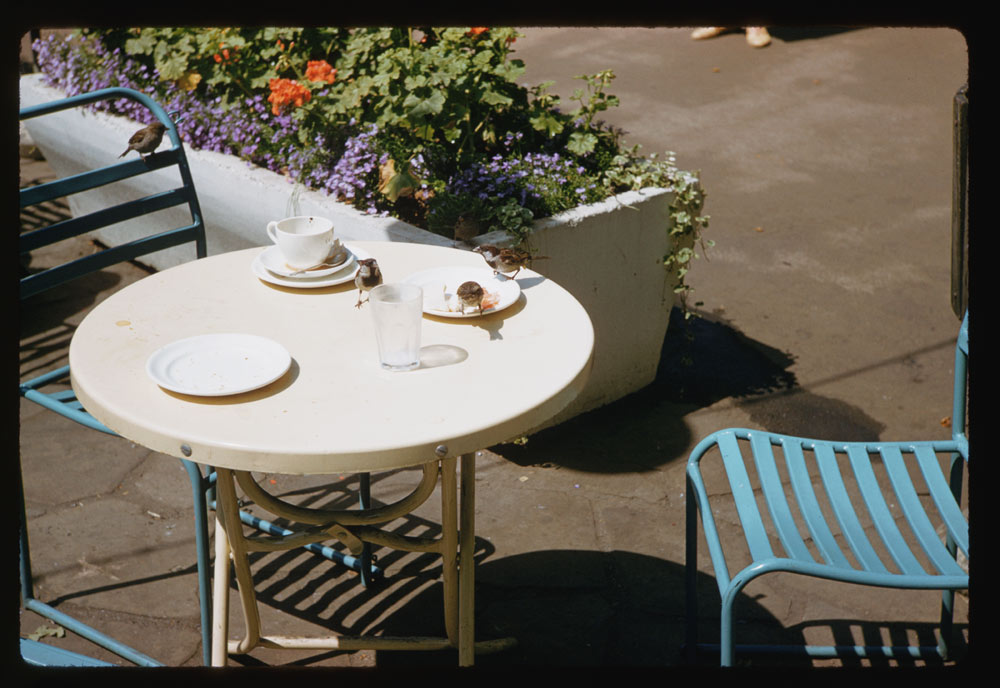 Date: Jun. 28, 1961 Location: London, England, United Kingdom (Greater London county) Description: Hungry sparrows on table in Victoria Embankment Gardens