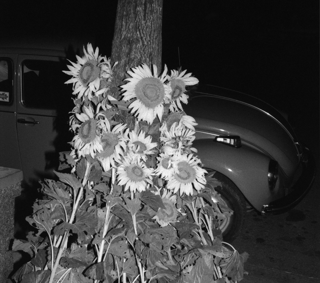 Sunflowers adorn the outside of Liberty Hall. VW Beatle, Kansas