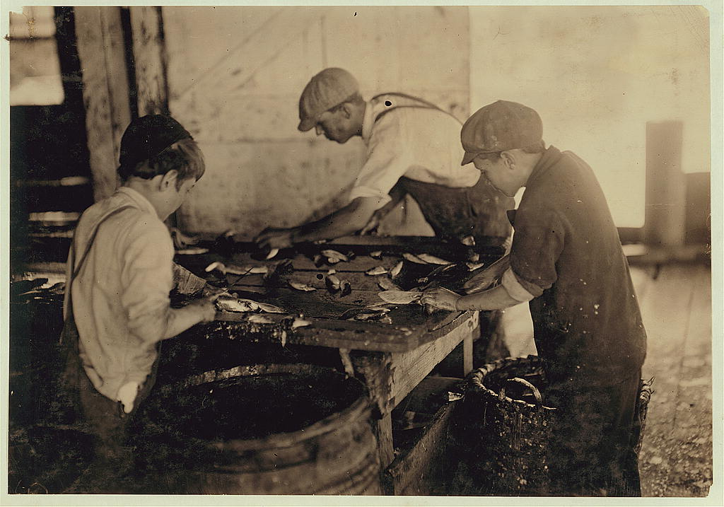 """Shows the way they cut the fish in sardine canneries. Large, sharp knives are used, with a cutting and sometimes a chopping motion. The slippery floors and benches, and careless bumping into each other increase the liability to accident. """"The salt gits in the cuts an' they ache."""" Location: Eastport, Maine."""