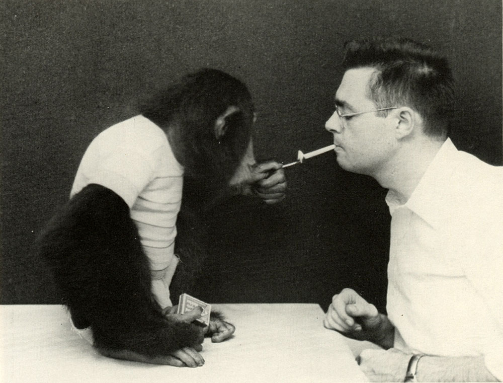 Why Chimps Can Read 1976