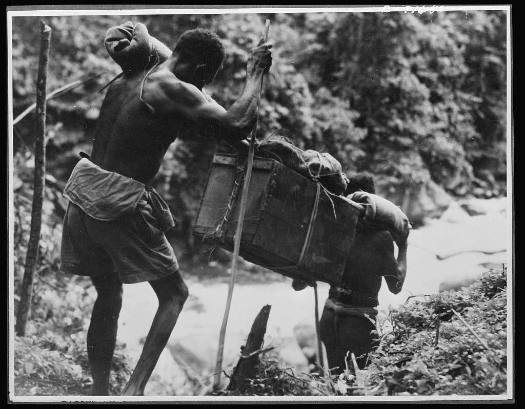 Natives aid Allied drive in New Guinea jungles. Long distances must be traversed by the supply lines of the Allied troops in the New Guniea area. Native carriers, shown above, keep going all day long through the trackless undergrowth in carrying supplies and evacuating the wounded