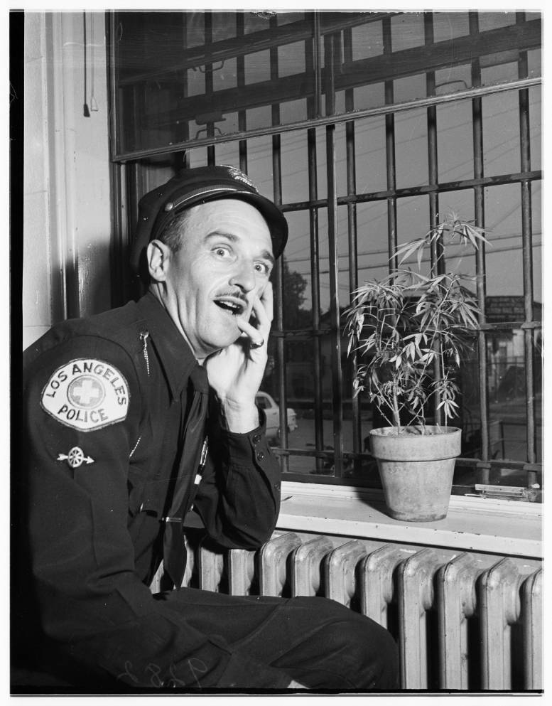 Marijuana_in_Van_Nuys_Jail_1951