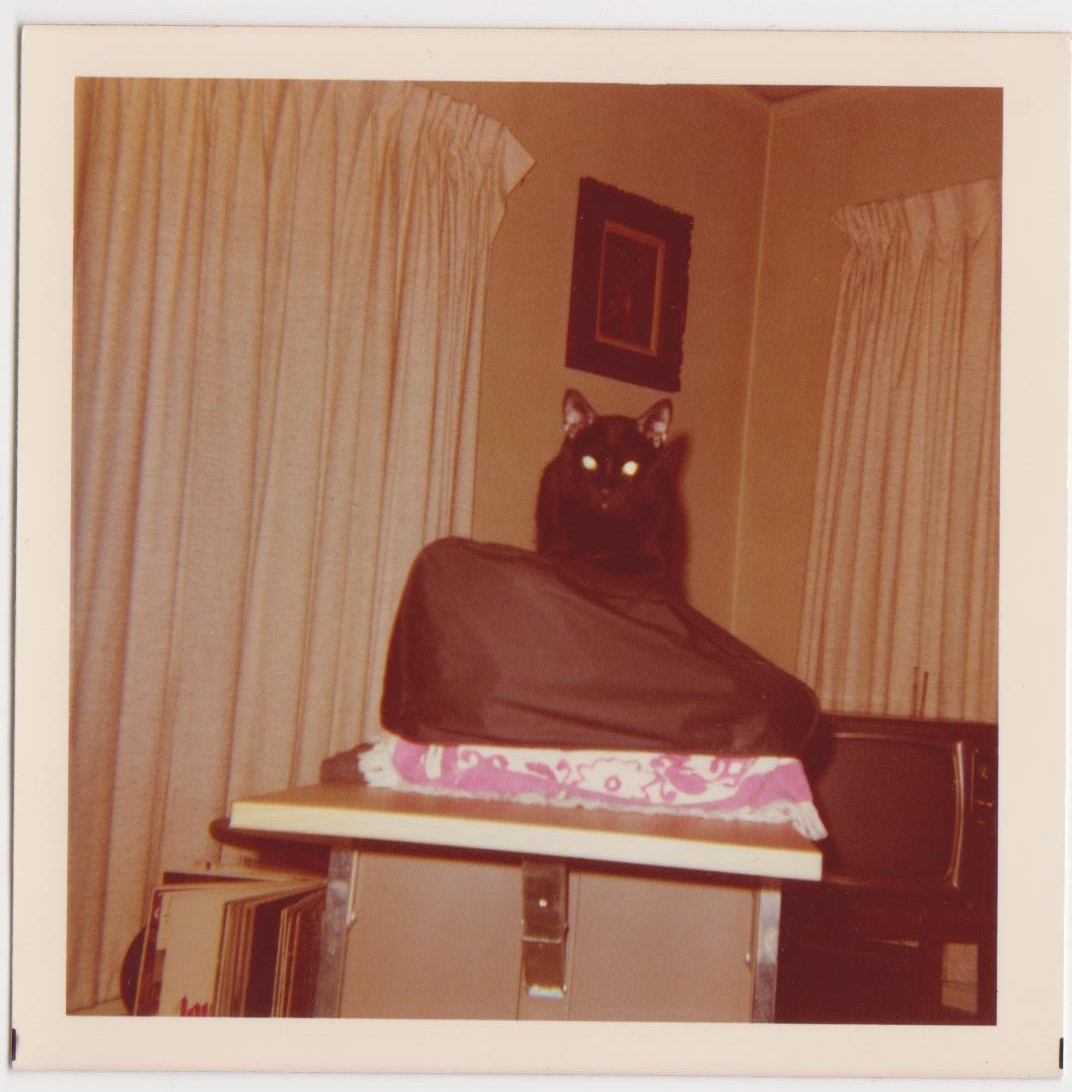 cats snapshots vernacular photography