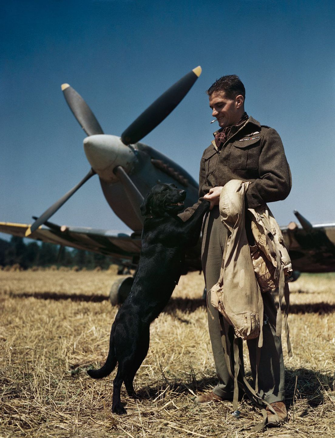 July 1944 The RAF's top-scoring fighter pilot, Wing Commander James 'Johnnie' Johnson, with his Spitfire and pet Labrador 'Sally' in Normandy.