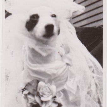 A Curious Collection of June Brides: Vintage Marriage Snapshots