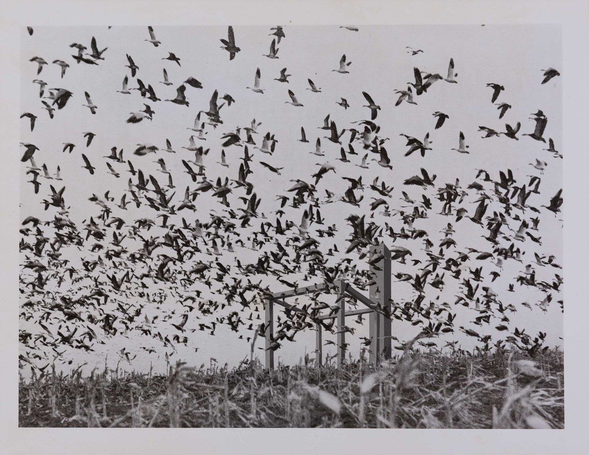 Derek Boshier (1937), 16 Situations- 5. Flock of 40,000 snow geese over a cornfield. Oaks, North Dakota, USA, 1971
