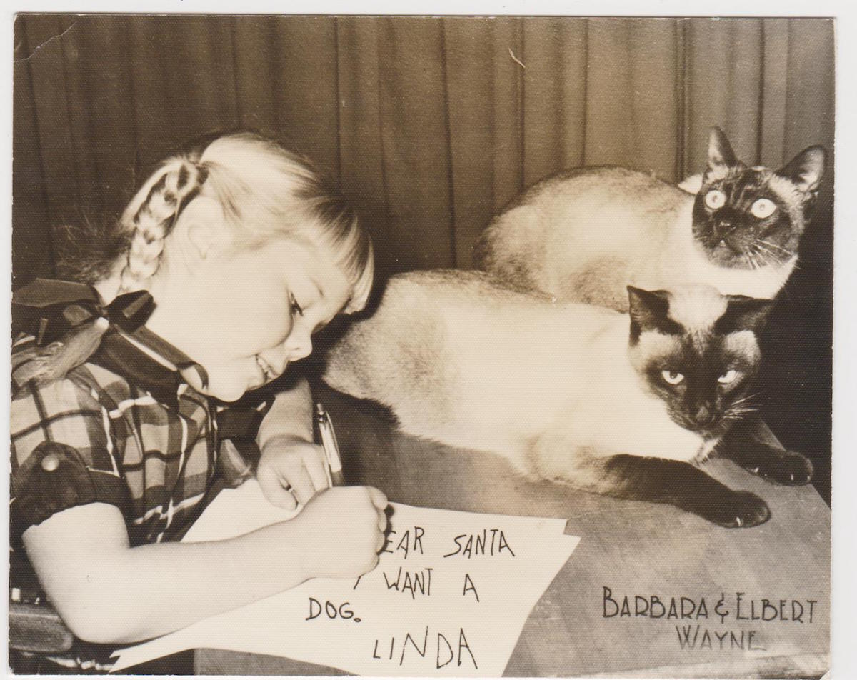 Family Pets in Holiday Greeting Cards