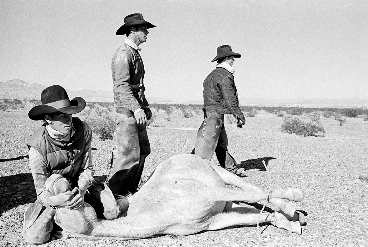 Arizona USA The round-up of the last wild horses in the desert of Arizona. Bullhead City, 1980