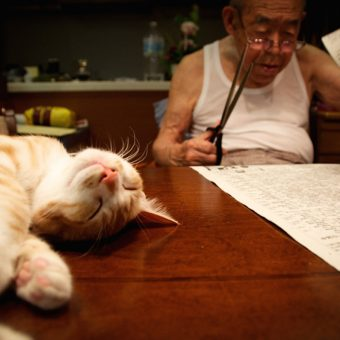 Jiji and Kinako: A Cat Brought Joy To My Sick And Grumpy Grandpa