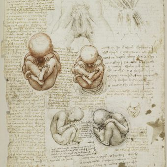 Body Maps: Leonardo da Vinci's Anatomical Drawings