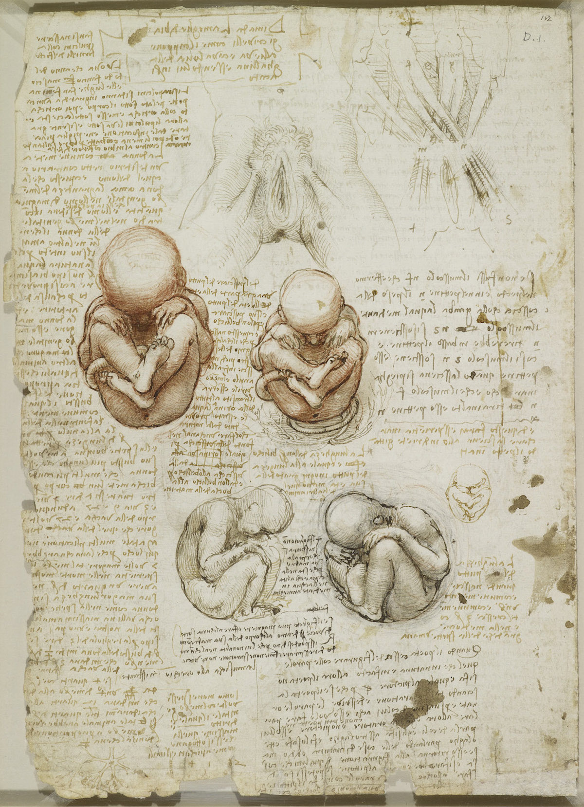 Body Maps: Leonardo da Vinci\'s Anatomical Drawings - Flashbak