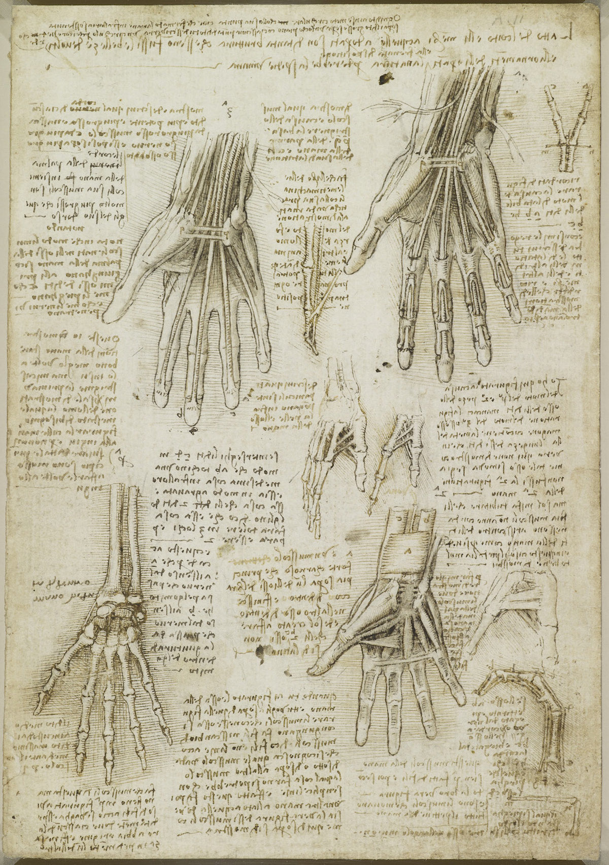 da vinci hands anatomical