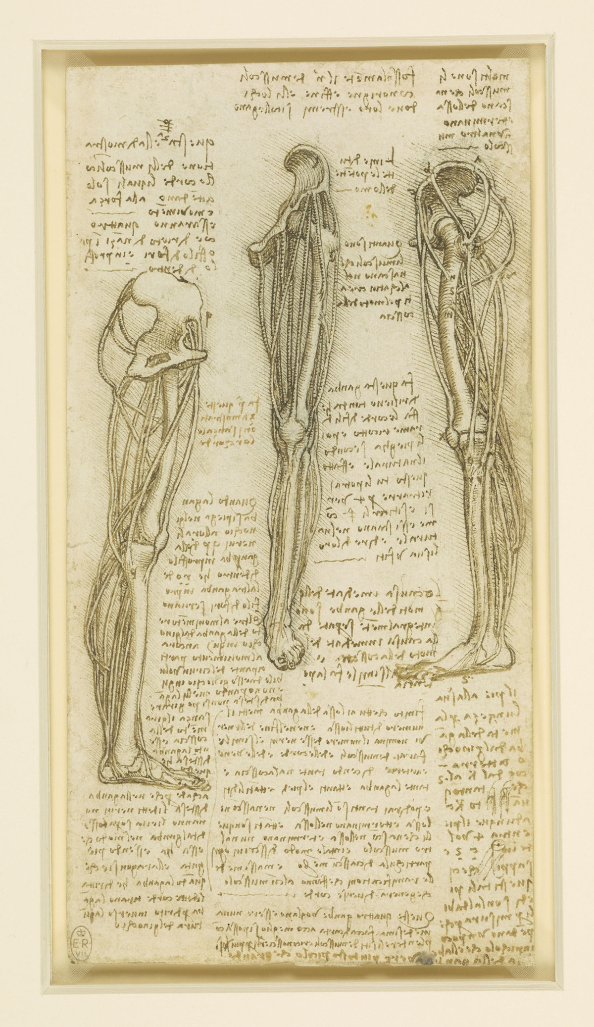Body Maps Leonardo Da Vincis Anatomical Drawings Flashbak