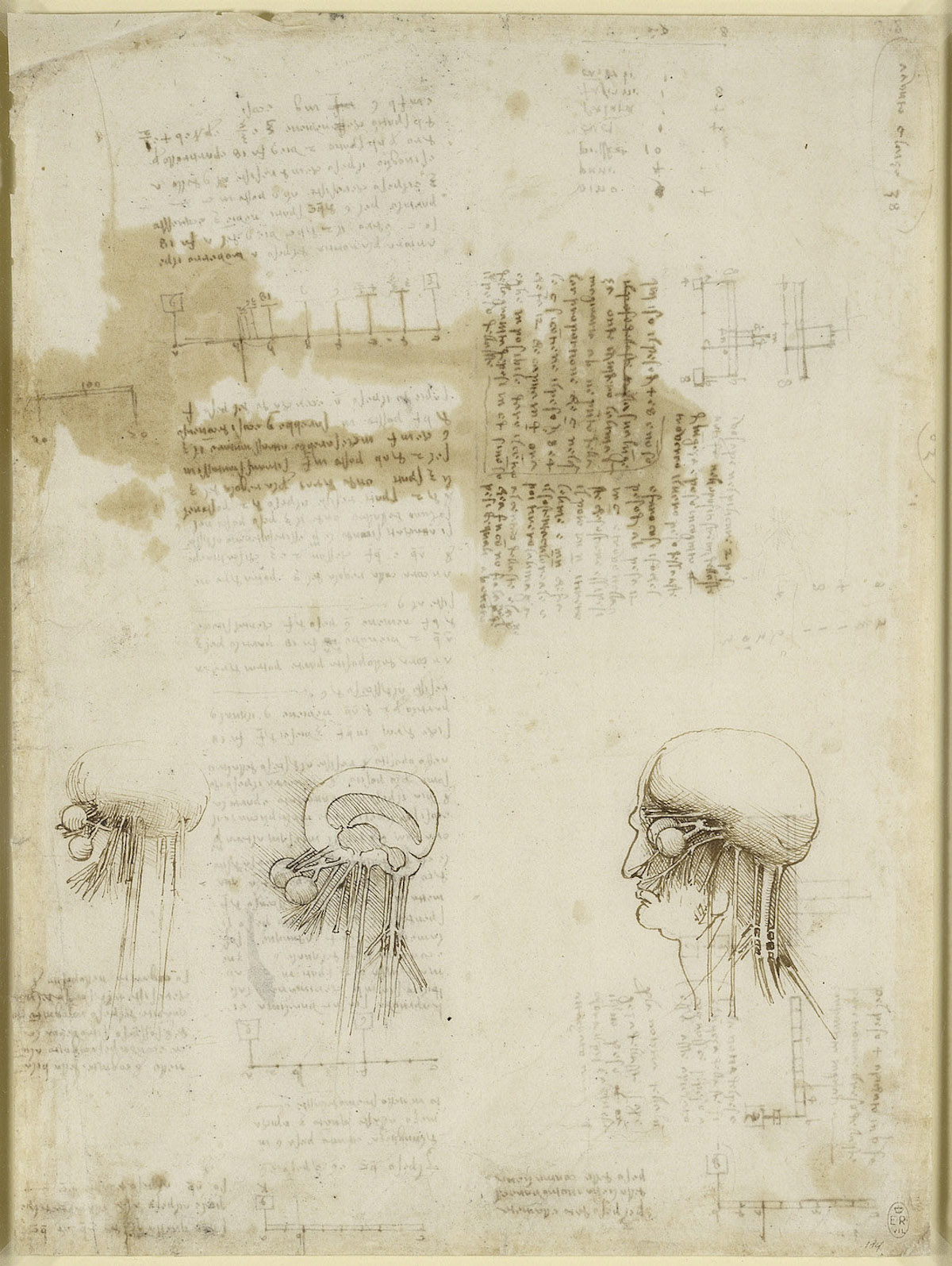 The nerve pathways to the brain. 1510