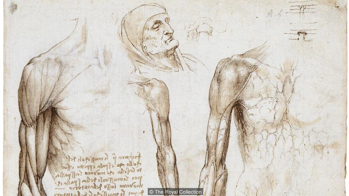 Leonardo Da Vinci Anatomy Image collections - human body anatomy